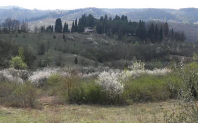 2012.04.11 イタリアの桜