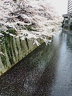 SAKURA548.jpg