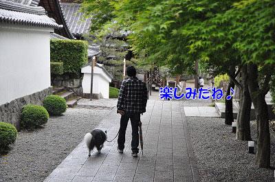 20110501-uji03.jpg
