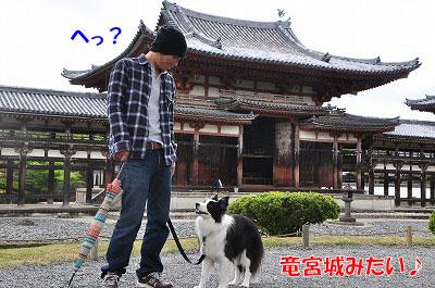 20110501-uji06.jpg