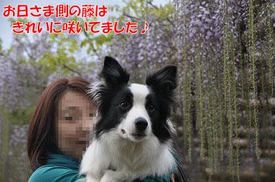 20110501-uji08.jpg