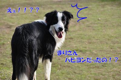 20110502-dg05.jpg