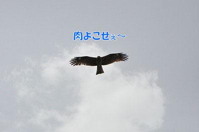 20110502-nagi11.jpg