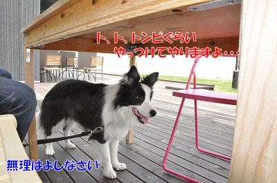 20110502-nagi12.jpg