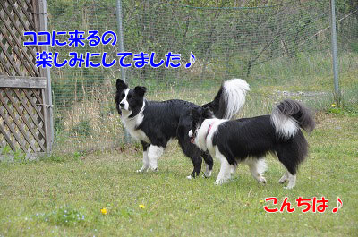 20110503-2dg10.jpg