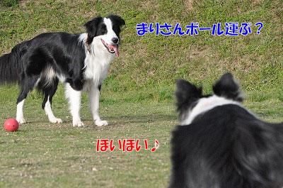20110503-dg07.jpg