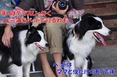 20110503-dg08.jpg