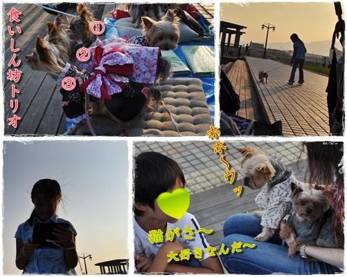 11_20110727223658.jpg