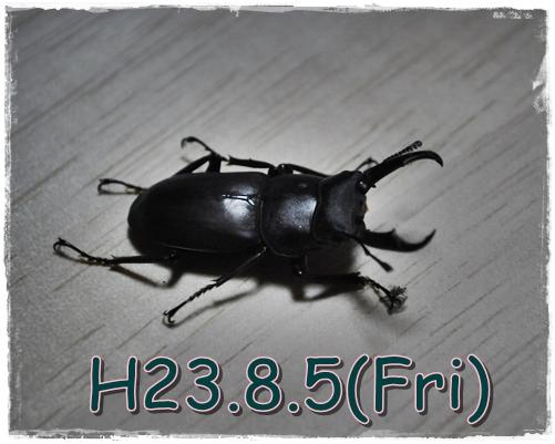 7_20110805215727.jpg