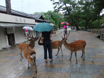 奈良観光 2