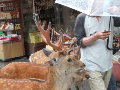 奈良観光 1