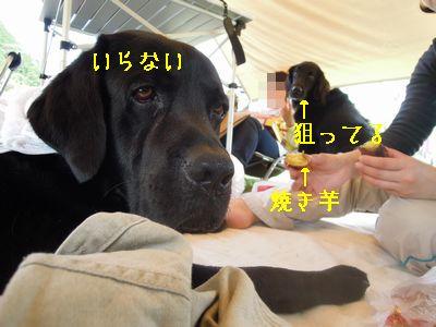b20120416-DSCN2574.jpg
