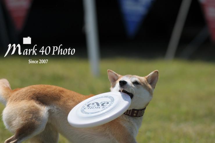 AvF4.5 Tv1/2500 ISO200