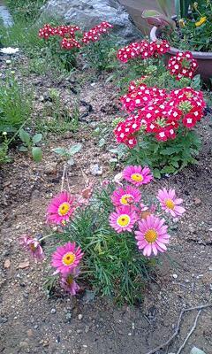 別荘 ピンクの小花