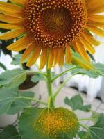 7月18日花粉が凄いです.jpg