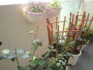 秘密の花園、休園