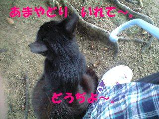 PA0_0019.jpg
