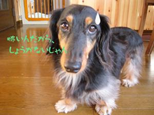 写真12(テツオ)