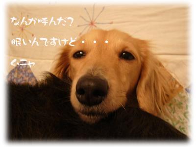 写真8(ピョンコ)
