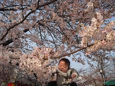 6 桜の開花