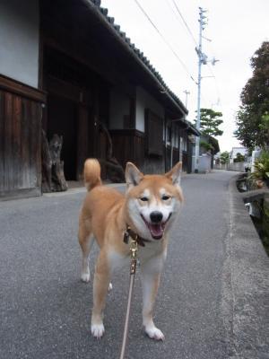 柴犬さんがなじむ風景です!
