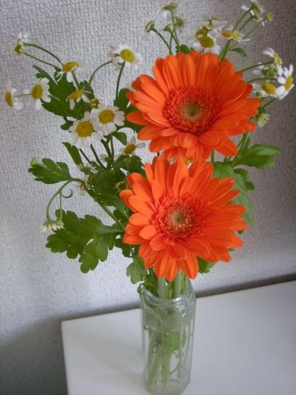 オレンジガーベラたち_convert_20090428160352