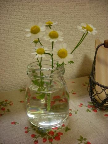 8月3週目のお花_convert_20090819151942