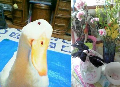 2011-0428-hei3_convert_20110428102102.jpg