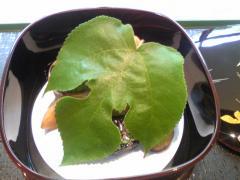京料理たか木6
