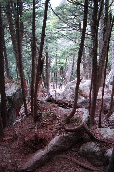 20111030-29登山道振り返る