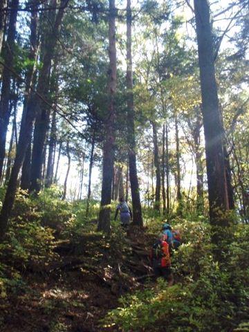 20111120-15稜線へ