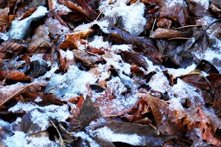 20111126-09雪