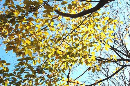 20111126-07残る秋