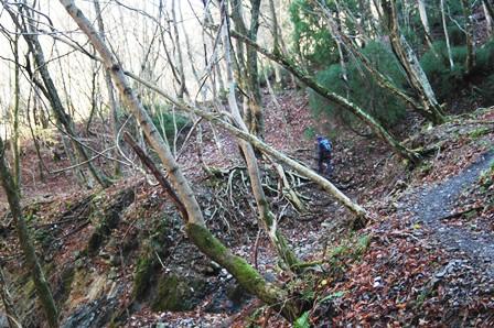 20111126-06自然林