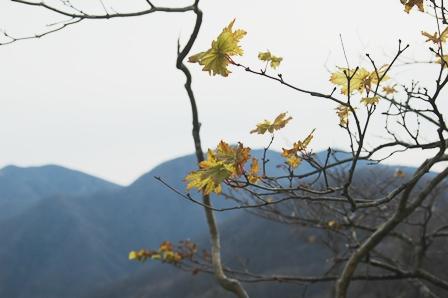 20111127-05 leaves