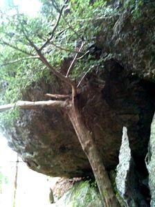 20111216-05木が岩を支える