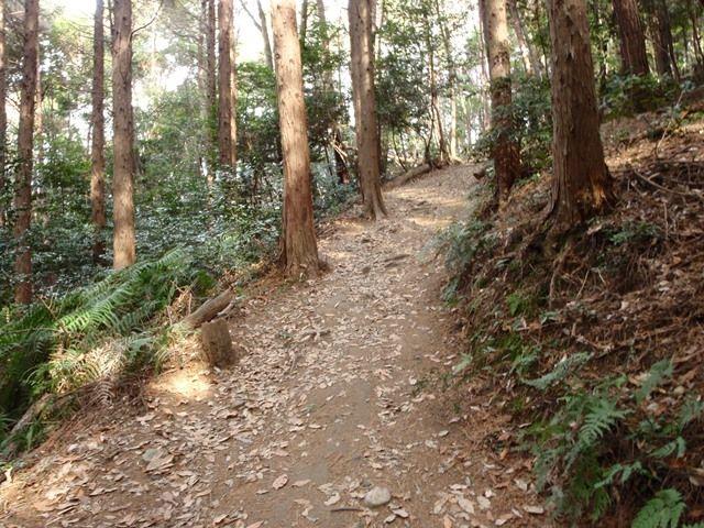 20120115-11 シダ広い道