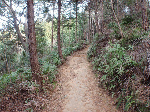 20120115-06直登コース