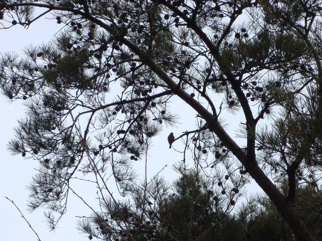 20120115-19山雀