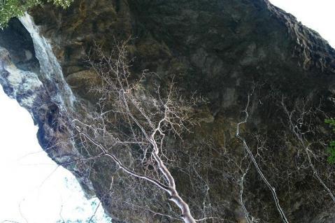 20120122-56見上げる