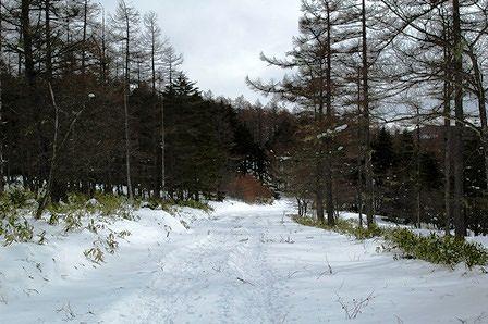 20120205-38首切から湿原への道