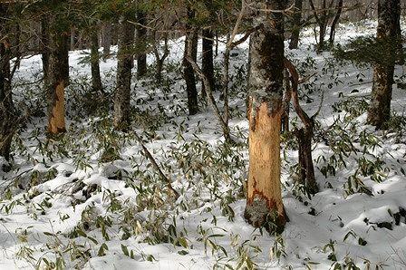 20120205-45鹿さんの食べあと