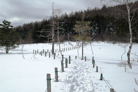 20120205-46湿原木道2
