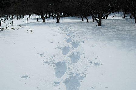 20120205-48人間の足跡