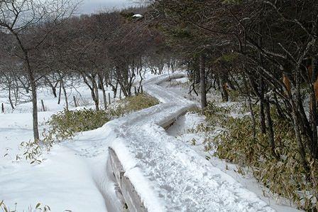 20120205-44湿原木道