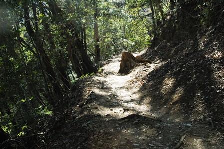 20120211-33登山道再び