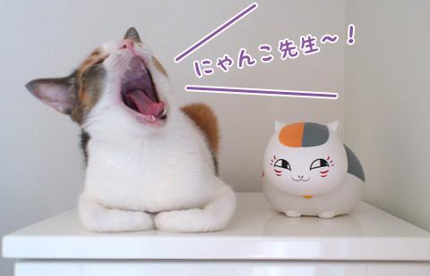 110727_ちはるとにゃんこ先生01