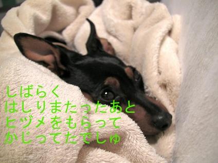 20110511-2.jpg