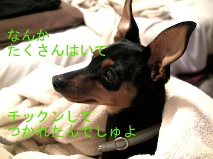 20110511-5.jpg