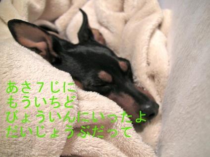 20110511-8.jpg